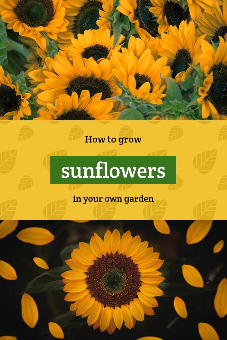 Gardening Tips Pinterest Post Maker