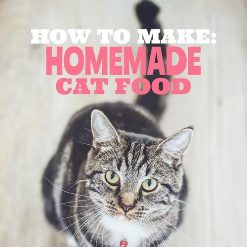 Cat Food Social Media Image Template