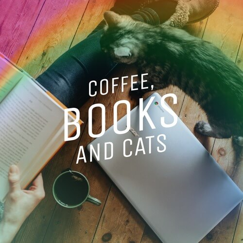 Cats And Books Twitter Social Media Images