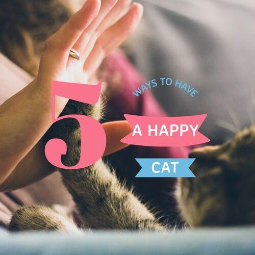 Happy Cat Social Media Image Maker